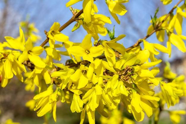 Primavera folhas e flores desabrochando