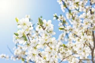 Primavera fundo marcha