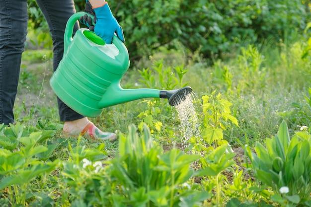 Primavera, mulher molhando broto de planta jovem de regador de jardim