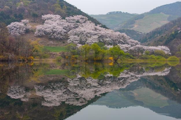 Primavera na coréia, o cenário refletido no lago