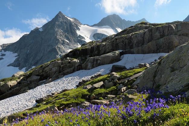 Primavera nas montanhas, flores e neve