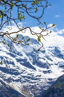 Primavera nos alpes