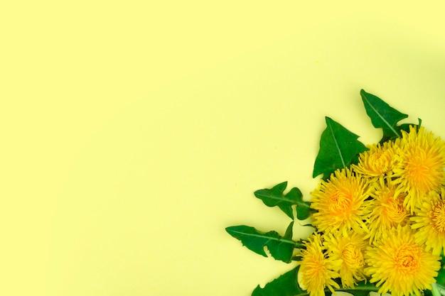 Primavera ou verão fundo. cinco dentes-de-leão amarelos com folhas ficam lindamente no canto direito em uma superfície amarela.