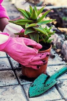 Primavera, plantas, cuidados