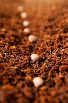 Primavera plantio de sementes. sementes em um substrato de coco.