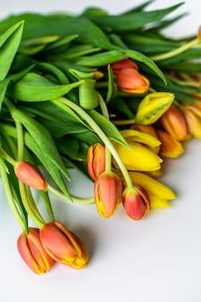 Primavera - poster com espaço de texto livre. tulipas amarelas, laranja e vermelhas. fundo branco. vista do topo