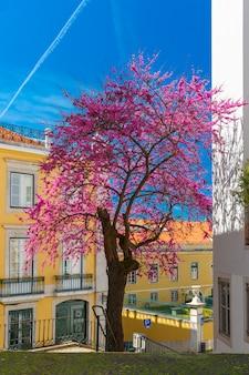 Primavera típica rua de lisboa, portugal