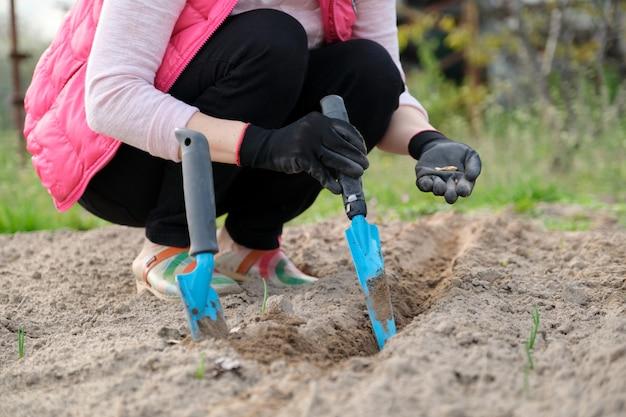 Primavera trabalho sazonal de primavera, plantio em solo cultivado de sementes de abóbora