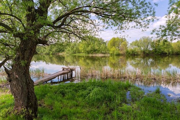 Primavera, verão, margem do rio com árvores ao longo da margem, grama e uma ponte de pesca