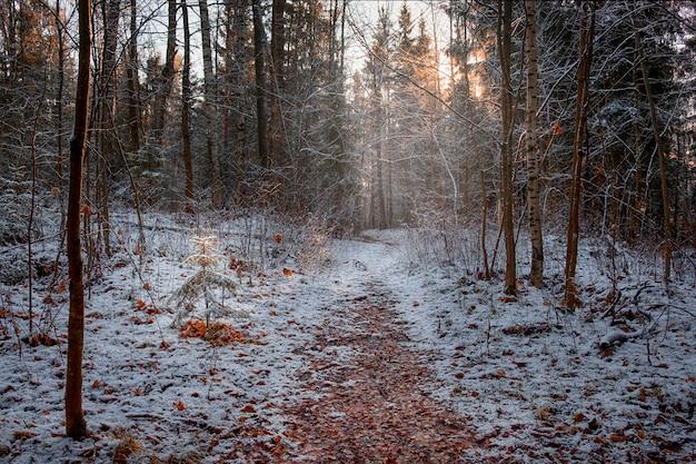 Primeira neve e geada na floresta de outono