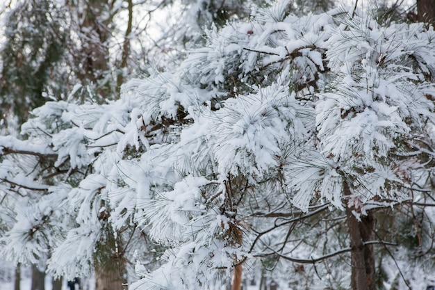 Primeira queda de neve no parque da cidade