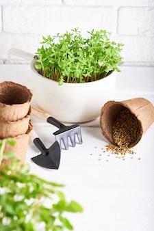 Primeiras plântulas cultivadas a partir de sementes em caixas no peitoril da janela com ferramentas de jardinagem