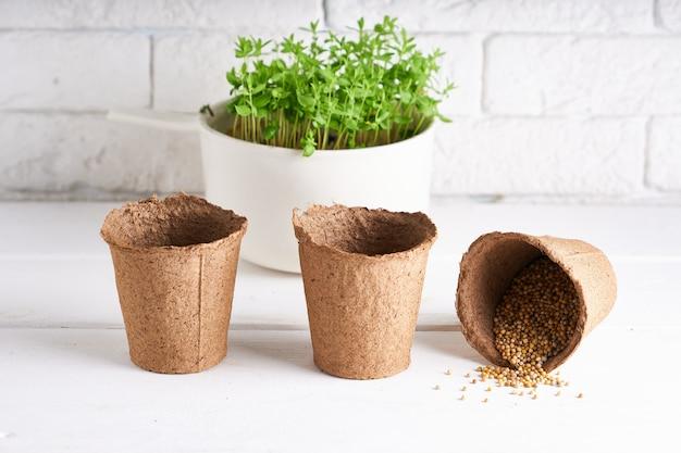 Primeiras plântulas cultivadas a partir de sementes em caixas no peitoril da janela