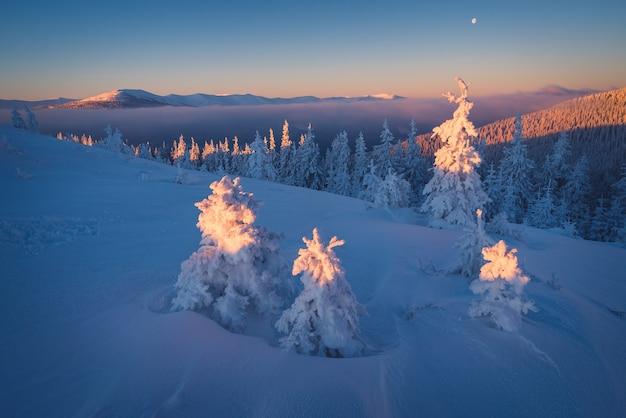 Primeiros raios de sol nas montanhas. paisagem de inverno com pinheiros nevados. vista de natal