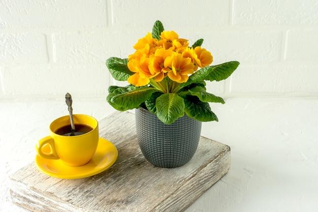 Prímula florescendo amarela em vaso de flores ao lado da xícara de café amarela no fundo. jardinagem doméstica.