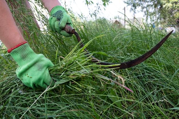 Processe a limpeza da grama com uma foice.