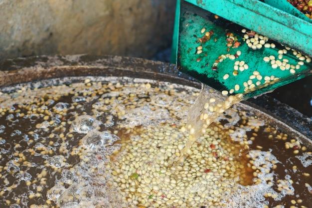 Processo de grão de café de bagas vermelhas na fábrica