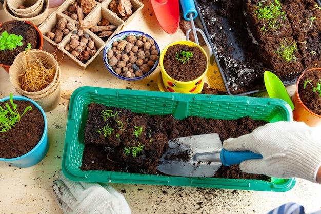 Processo de transplante de plantas close-up. acessórios de jardinagem