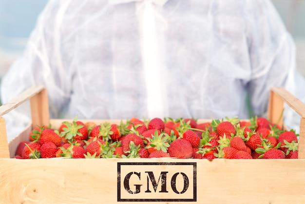 Produção de frutas geneticamente modificadas