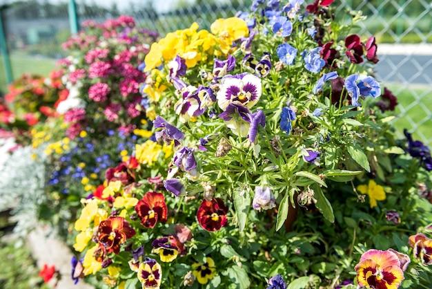 Produção de muitas plantas de flores coloridas em uma estufa para venda.