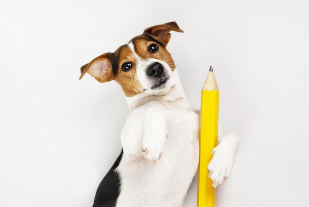 Professor de cão