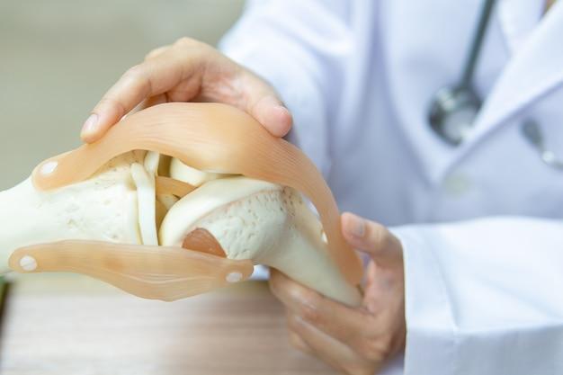 Profissional médico apontou na área da articulação do joelho modelo