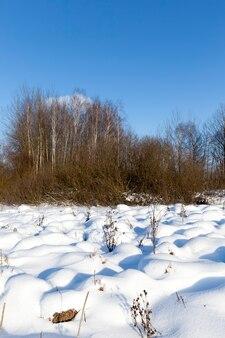 Profundos montes de neve fofa no inverno, neve no inverno é congelada, natureza após queda de neve e nevascas