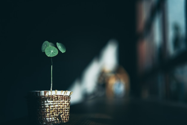 Projeto de decoração de plantas em estilo minimalista de fundo, xícara de bebida na mesa de madeira natural, interior moderno de parede verde em uma sala de cafés caseiros, bebida quente e luz do sol pela manhã