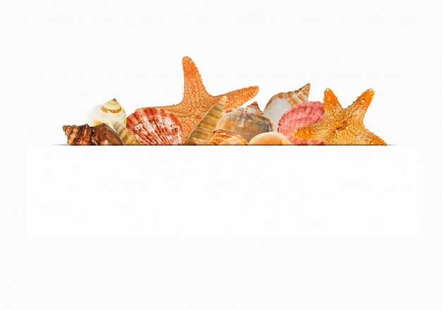 Projeto de frutos do mar para rótulo em fundo branco