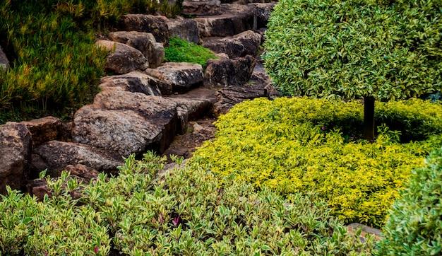 Projeto de paisagem de luxo do jardim tropical