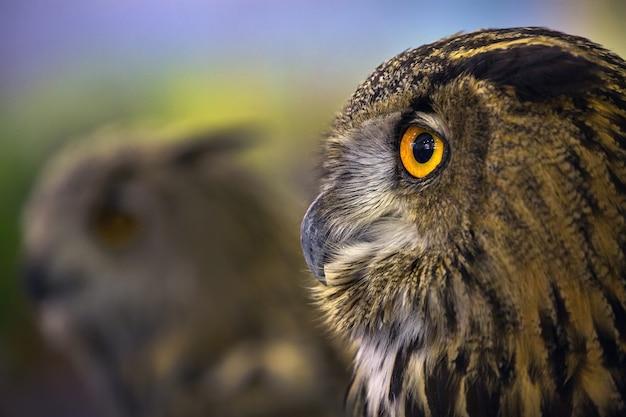 Projeto detalhado na face da coruja de águia