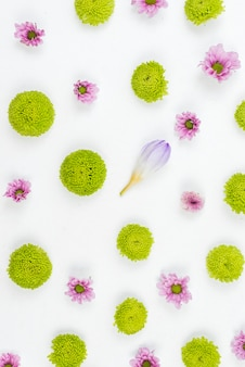 Projeto do teste padrão de flor no fundo branco