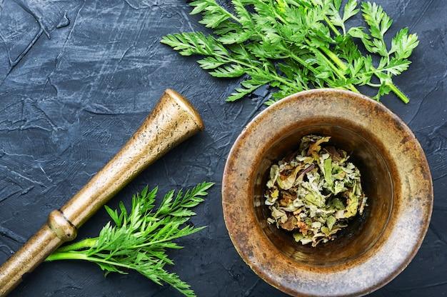 Propriedades curativas da cenoura selvagem na fitoterapia. plantas medicinais frescas e curativas.