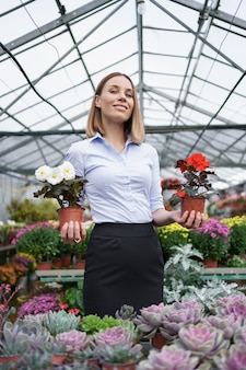 Proprietário de empresa sorridente em seu viveiro de pé segurando nas mãos dois vasos com flores vermelhas e brancas na estufa