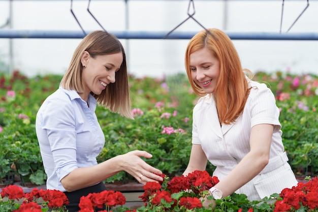 Proprietário de estufa apresentando flores de gerânio a um cliente varejista em potencial.