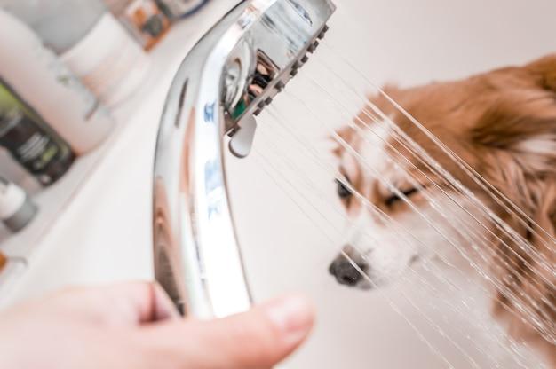 Proprietário derrama um banho no banheiro de seu cachorro. conceito de higiene canina