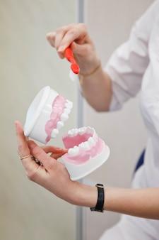 Protetista dentista feminina mostra regras para escovar os dentes. mostre a escova de dentes e o modelo da mandíbula humana para obter instruções sobre como cuidar do close-up dos dentes. conceito de saúde e odontologia. copie o espaço