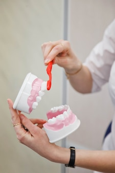 Protetista dentista feminina mostra regras para escovar os dentes. mostre a escova de dentes e o modelo da mandíbula humana para obter instruções sobre como cuidar dos dentes em close-up