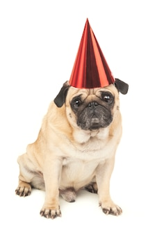 Pug com chapéu de festa