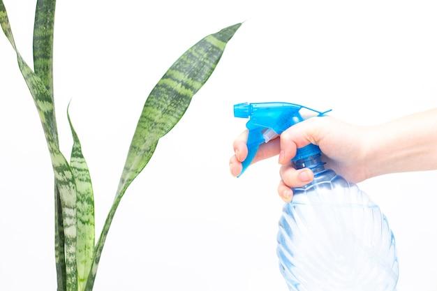 Pulverizar água em plantas de interior isoladas
