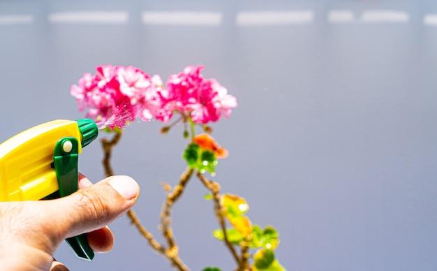 Pulverizar uma flor de um frasco de spray