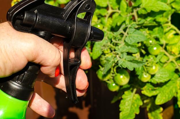 Pulverizar vegetais e plantas de jardim com pesticidas para proteger contra doenças e pragas com pulverizador manual.