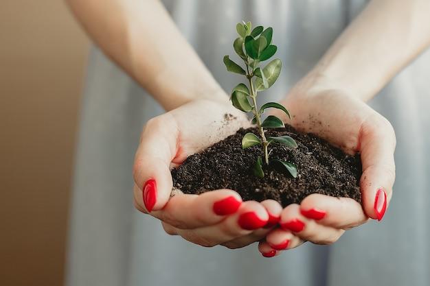Punhado de solo com planta jovem crescendo