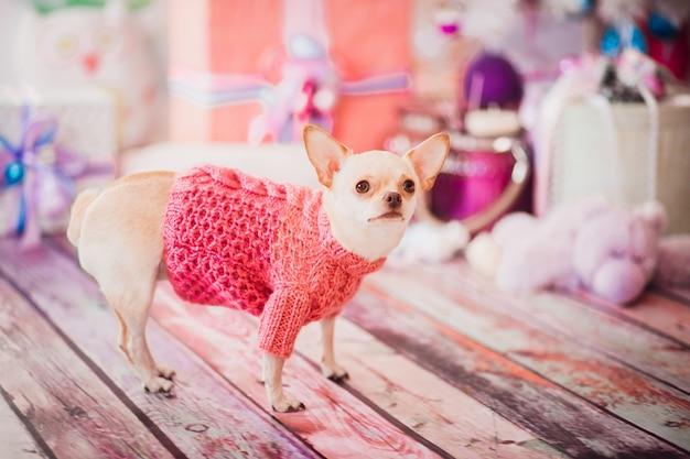 Puppy hotel de animais longhair orgulhoso