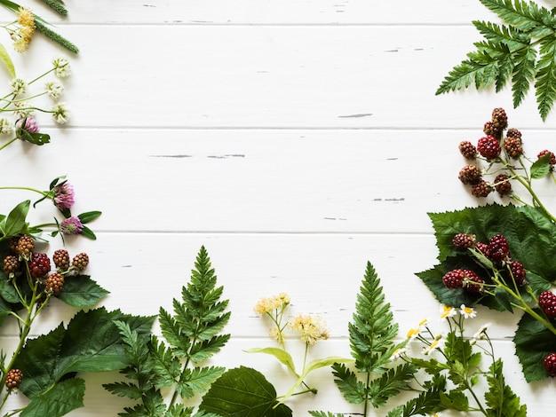 Quadro botânico da amora-preta, camomila, flor do linden, trevo no fundo de madeira. composição plana leiga de ervas frescas selvagens e flores na vista superior de fundo branco rústico