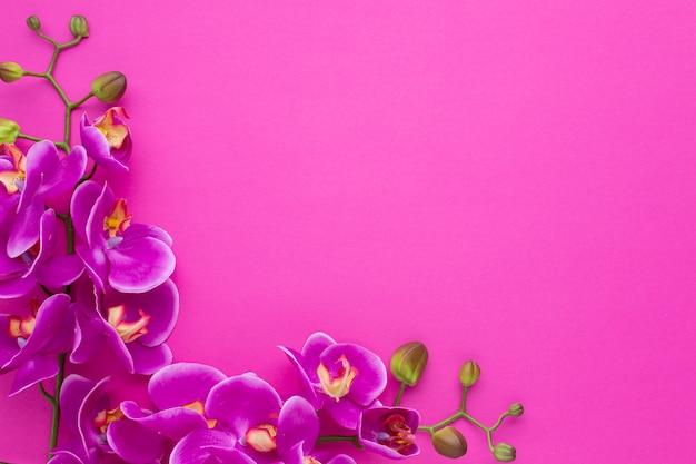 Quadro com cópia espaço rosa fundo