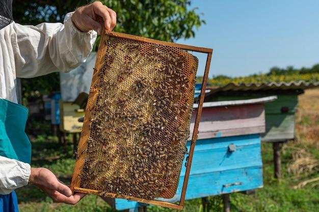 Quadro com favos de mel nas mãos de um apicultor, close-up colmeias no fundo