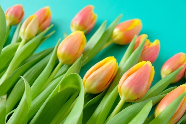 Quadro com tulipas vermelhas-amarelas frescas em um fundo de hortelã. conceito de dia internacional da mulher, dia das mães, páscoa