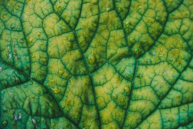 Quadro completo da folha verde imperfeita com gotas de orvalho.