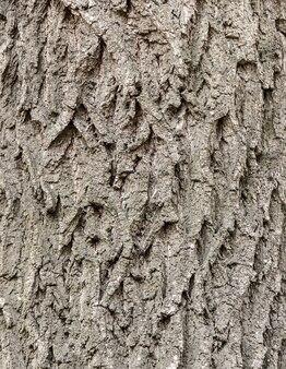 Quadro completo da textura da árvore da casca na natureza